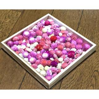 お花屋さんが作った本日の千日紅はたっぷり150個+おまけ(ドライフラワー)