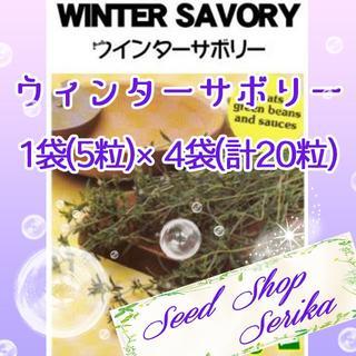 ①ウィンターサボリー 5粒×4袋(20粒) SeedShop♥SERIKA♥(その他)