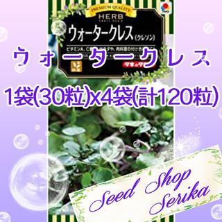 ②ウォータークレス(クレソン) 30粒×4袋 SeedShop♥SERIKA♥(その他)