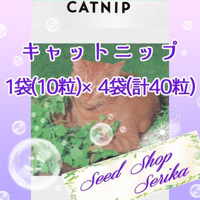 ④キャットニップ10粒 ×4袋(40粒) ハーブ 種 ハンドメイドのフラワー/ガーデン(その他)の商品写真