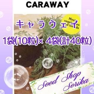 ⑤キャラウェイ 10粒×4袋(40粒) SeedShop♥SERIKA♥(その他)