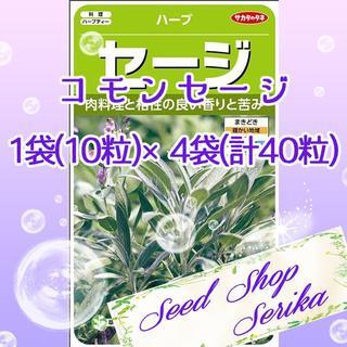⑧コモンセージ 10粒×4袋(40粒) ハーブ 種(その他)
