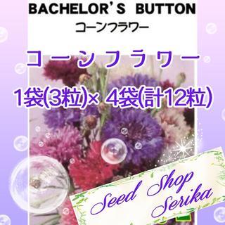 ⑫コーンフラワー 3粒×4袋(12粒) SeedShop♥SERIKA♥(その他)
