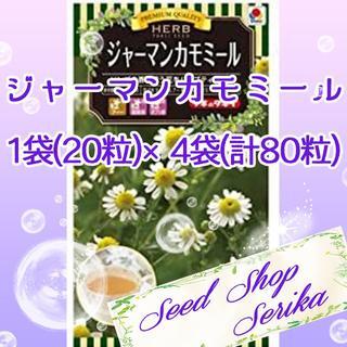 ⑭ジャーマンカモミール20粒 ×4袋(80粒) SeedShop♥SERIKA♥(その他)