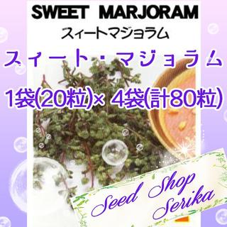 ⑰スィートマジョラム 20粒 ×4袋(80粒) SeedShop♥SERIKA♥(その他)