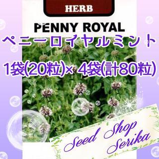 ⑲ペニーロイヤルミント20粒 ×4袋(80粒) SeedShop♥SERIKA♥(その他)