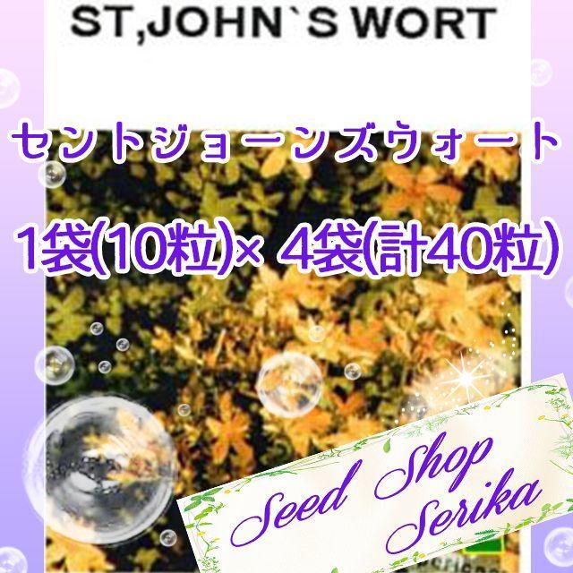 ㉑セントジョーンズウォート 10粒×4袋 ハーブ 種 ハンドメイドのフラワー/ガーデン(その他)の商品写真