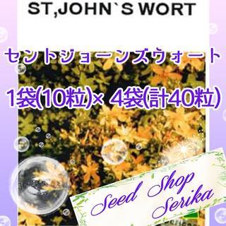 ㉑セントジョーンズウォート 10粒×4袋 SeedShop♥SERIKA♥(その他)