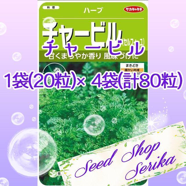㉓チャービル 20粒 ×4袋(80粒) ハーブ 種 ハンドメイドのフラワー/ガーデン(その他)の商品写真
