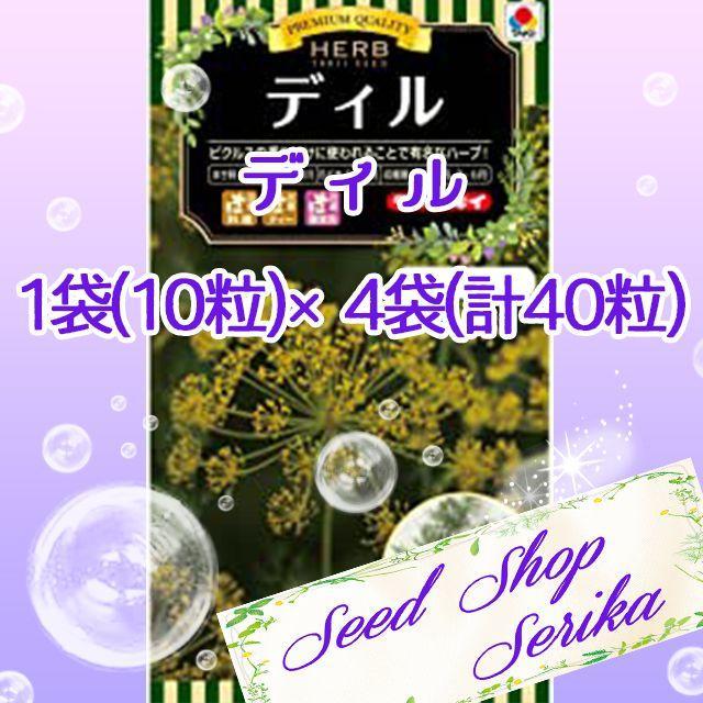 ㉔ディル 10粒 ×4袋(40粒) ハーブ 種 ハンドメイドのフラワー/ガーデン(その他)の商品写真