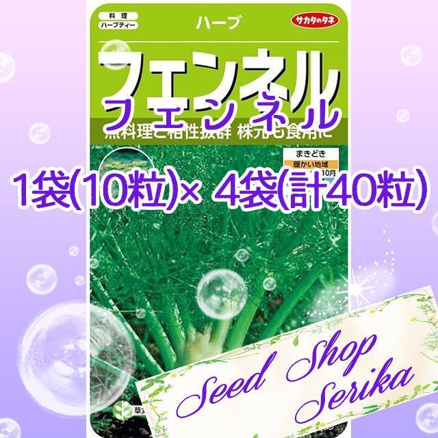 ㉗フェンネル 10粒 ×4袋(40粒) ハーブ 種 ハンドメイドのフラワー/ガーデン(その他)の商品写真