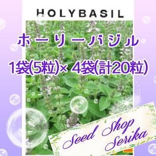 ㉙ホーリーバジル 5粒×4袋(20粒) SeedShop♥SERIKA♥(その他)