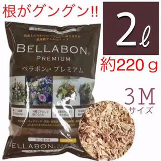 フジックヤシの実(3M)■観葉植物 ポトス、ベビーサンローズ、薔薇 紫陽花等