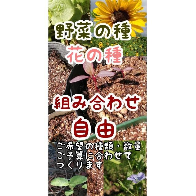 花と野菜の種 自然農・自家採取多数あり ハンドメイドのフラワー/ガーデン(その他)の商品写真