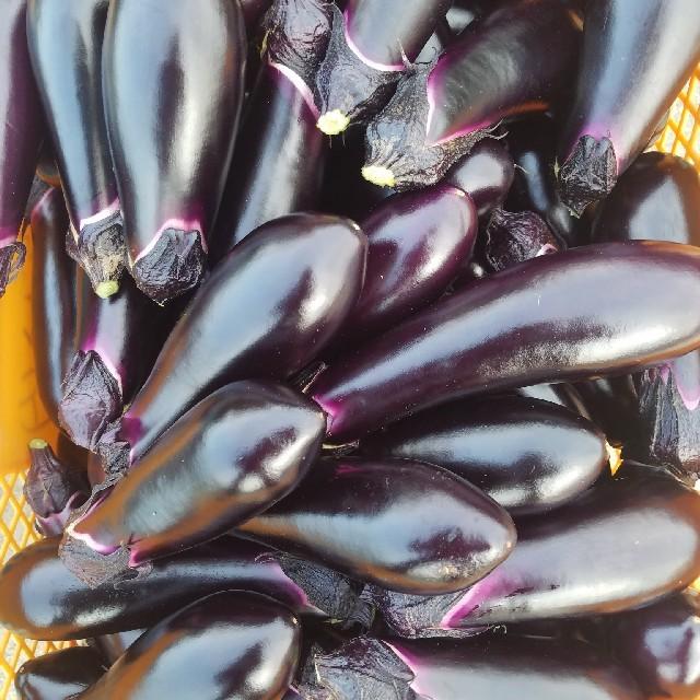 茄子 なす 訳あり B級品 約4キロ 20~25本 食品/飲料/酒の食品(野菜)の商品写真