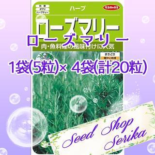 ㉝ローズマリー 5粒×4袋(20粒) ハーブ 種(その他)
