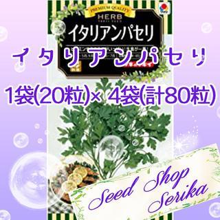 ㊱イタリアンパセリ20粒 ×4袋(80粒) ハーブ 種(その他)
