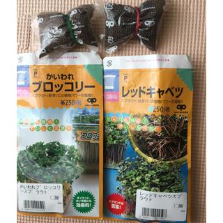 スプラウト種 レッドキャベツ ブロッコリー(野菜)