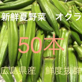 広島県産 新鮮夏野菜 鮮度抜群 朝採り&夕採 旬の夏野菜 オクラ50本セット