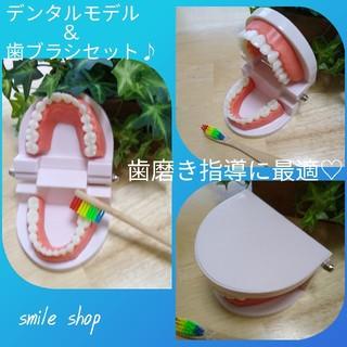 ラスト3点!歯の模型&歯ブラシセット♡デンタルモデル、歯列模型、歯磨き指導に