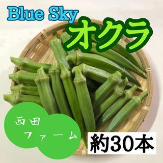 熊本県八代産 新鮮オクラ(ブルースカイ)約30本(野菜)