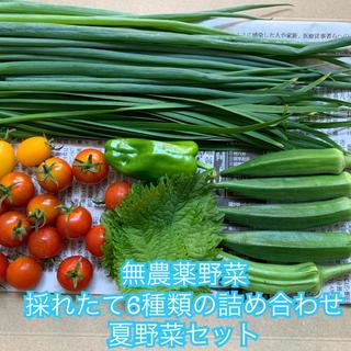 無農薬野菜*採れたて6種類の詰め合わせ*ネコポスで翌日配達*夏野菜セット*