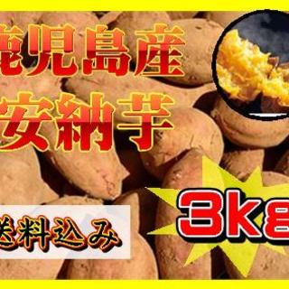 鹿児島産 安納芋 約3kg(貯蔵済み)(野菜)