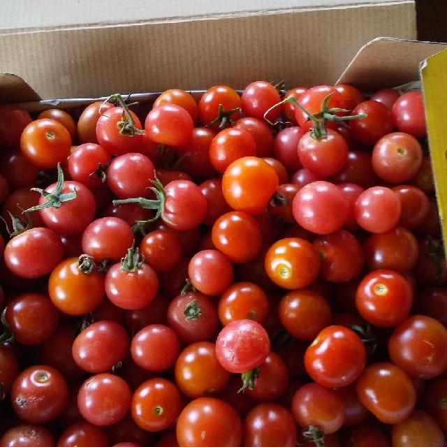 ミニトマト一キロ無農薬 食品/飲料/酒の食品(野菜)の商品写真