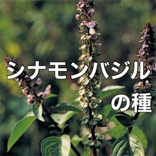 【安心安全の有機種子】シナモンバジルの種 30粒 ハーブ バジル 種 タネ(野菜)