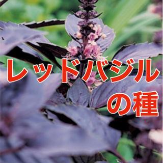 【安心安全の有機種子】レッドバジルの種 30粒 野菜 ハーブ バジル 種 タネ(野菜)