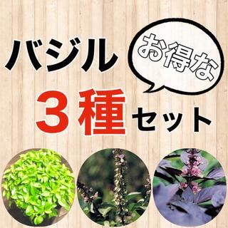 【内容変更可‼️】バジルの種3種セット 珍しいバジルとも変更可‼️ ハーブ タネ(野菜)