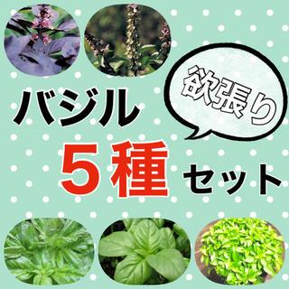 【内容変更可‼️】バジルの種5種セット 珍しいバジルとも変更可‼️ ハーブ タネ(野菜)