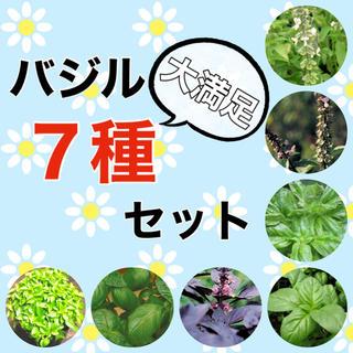 【内容変更可‼️】バジルの種7種セット 珍しいバジルとも変更可‼️ ハーブ タネ(野菜)