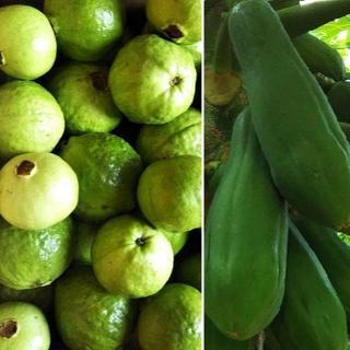 TR0807柔1.5&2『小玉グァバ(白)&青パパイヤ』 柔らか品種 果物&野菜(フルーツ)
