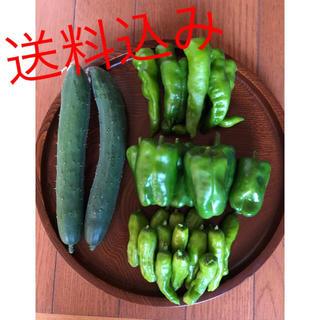 限定BOX 即日発送 新鮮野菜 無農薬 万願寺 胡瓜 ししとう ピーマン(野菜)
