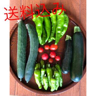 即日発送 無農薬 新鮮野菜 きゅうり ズッキーニ 万願寺 トマト ししとう(野菜)
