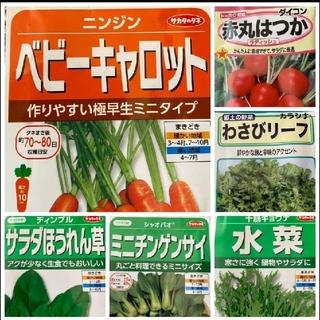 野菜の種 6種類+サンチュ30粒 家庭菜園 プランター(野菜)