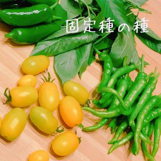 ★固定種★野菜の種(野菜)