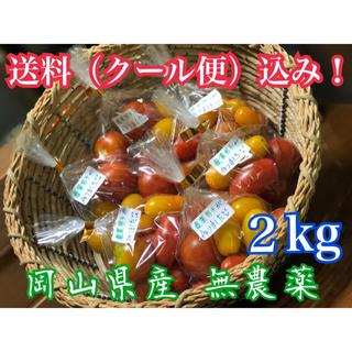 岡山県産 完全無農薬野菜 4種類ミニトマト‼️(野菜)