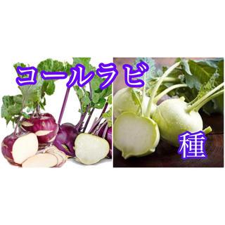 紫コールラビ種20粒と緑コールラビ種20粒(その他)