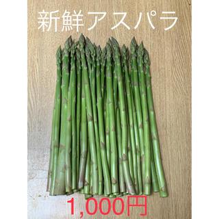 ‼️リピーター多数‼️島根県産朝取れアスパラ500g(野菜)