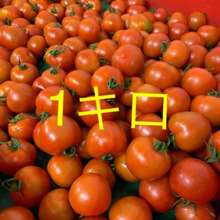 トマトフルティカ(野菜)