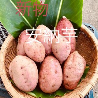 安納芋新物5キロ(野菜)