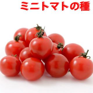 ミニトマトの種 約50粒(野菜)