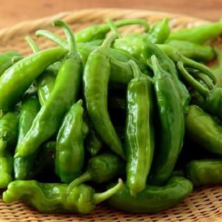 夏野菜 野菜セット 岩手県産(野菜)