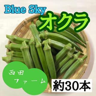熊本県八代産 新鮮オクラ(ブルースカイ) 約30本(野菜)