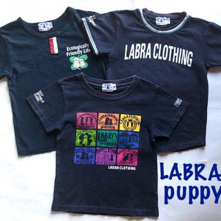 ラブラドールリトリーバー(Labrador Retriever)のラブラパピー ラブラドールレトリーバー Tシャツ3枚セット(Tシャツ/カットソー)