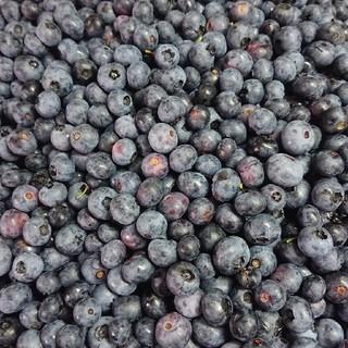 岩手県産 無農薬ブルーベリー 冷凍2キロ(フルーツ)