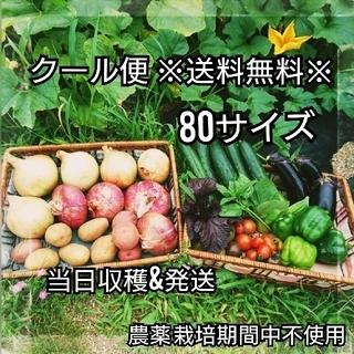 8/9収穫【クール便】朝収穫当日発送 農薬栽培期間中不使用 80サイズ 送料無料(野菜)