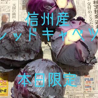 長野県産 レッドキャベツ 朝採れ (野菜)